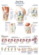 "PLAKAT ""The knee"" 50x70cm -   AL547"